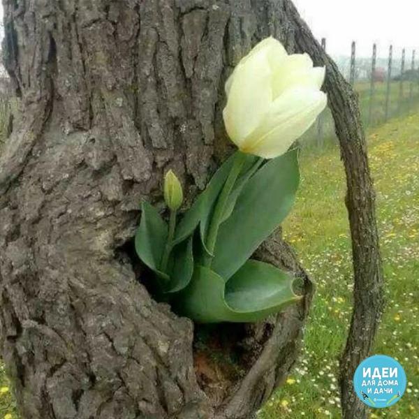 В жизни бывает всякое , и в природе тоже!