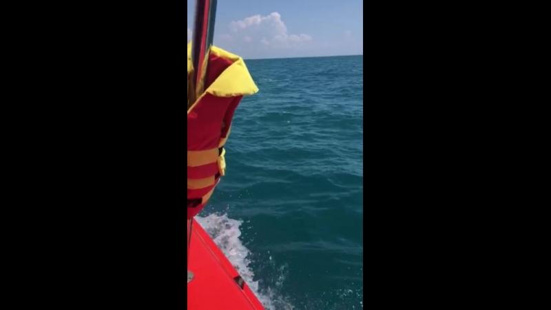 Дельфин с нами плыл,красота 👍👍👍