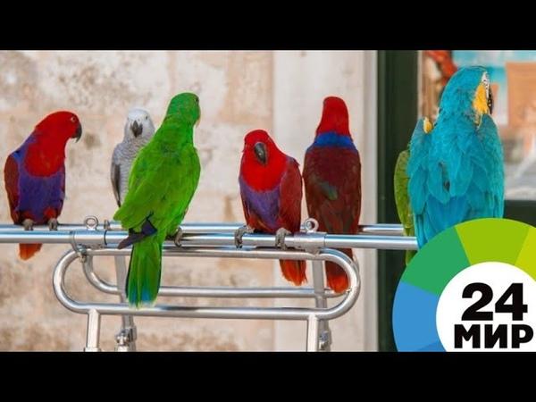 «Птичий Айболит»: орнитолог из Москвы говорит с птицами на одном языке - МИР 24