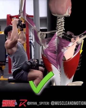 Вертикальная тяга на блочном тренажёре. Биомеханика.