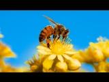 11.08.18 Поздний сбор пыльцы