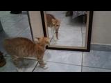 Gato se assusta com ele mesmo e faz coco