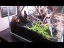 Montaje acuario plantado desde cero Aquascaping parte 2
