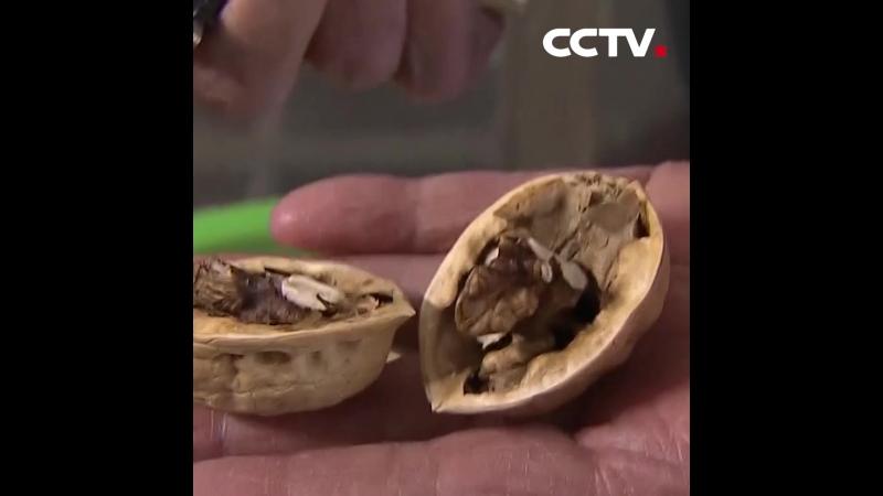 Как быстро почистить грецкие орехи