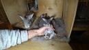 Как дела в гнезде у разновозрастных крольчат? :))