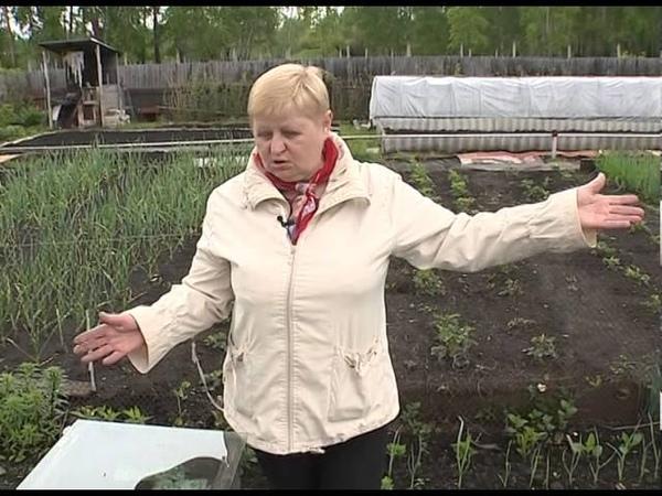 Высокие гряды на даче своими руками для овощей. В гостях у Анны Купреевой