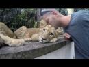 Black Jaguar White Tiger Foundation Part 1