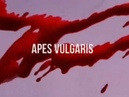 Apes Vulgaris.The Soap Opera 2.Chapter IV