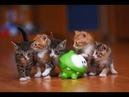 Ам Ням Кошка 7 Feed the Cat