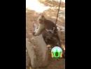 ахуенная обезьяна