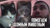 ГЕРОИ ИЗ ПРОЕКТА ЛЕВ ПРОТИВ - ПОМОГАЕМ БЕЗДОМНЫМ ЖИВОТНЫМ ПИШИТЕ на почту Львятам lazz95@mail.ru