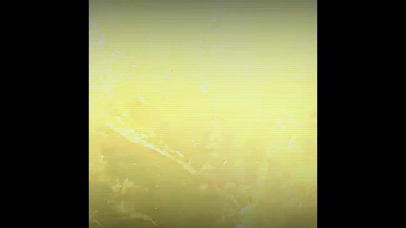 VID_39910803_161226_497.mp4