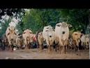 Top Gear Спецвыпуск в Бирме Часть 14