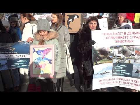 Пикет за освобождения косаток и белух из «китовой тюрьмы»