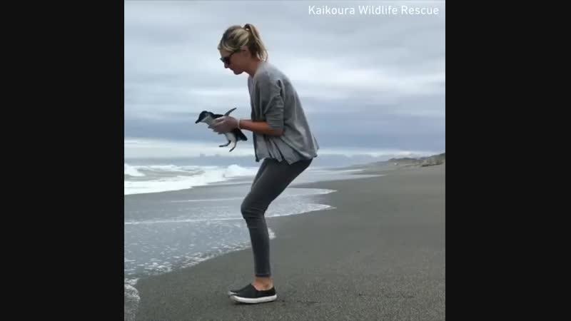 Пингвин, беги