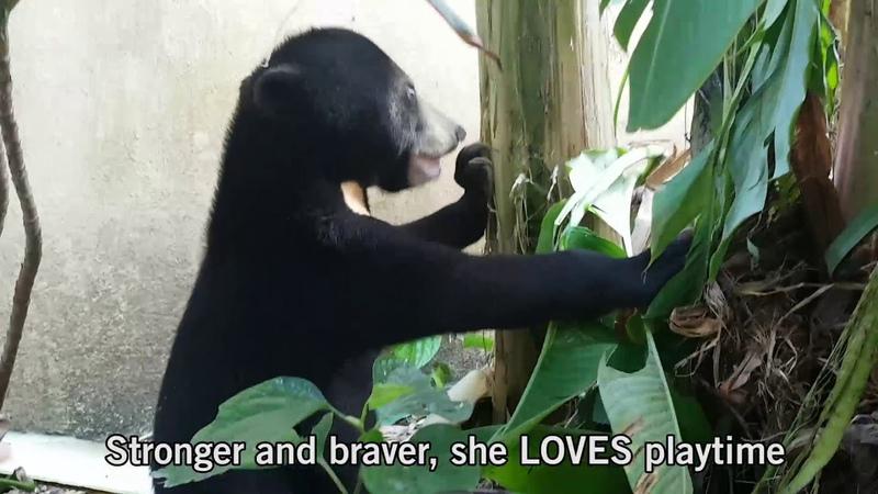 Orphaned sun bear cub nursed back to health