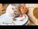 Hamster Kitchen 🔴 How To Make Heart Eggs For Your Hamster | Amazing Tiny Food For Your Pet