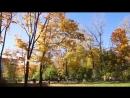 Золотая осень в нашем Лыткарино.