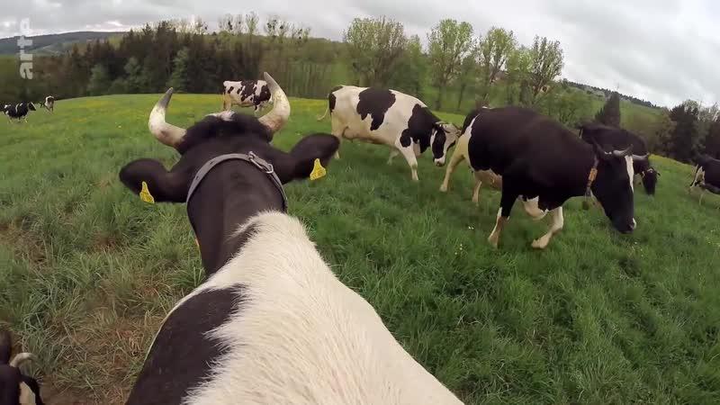 Une vie de vache ARTE