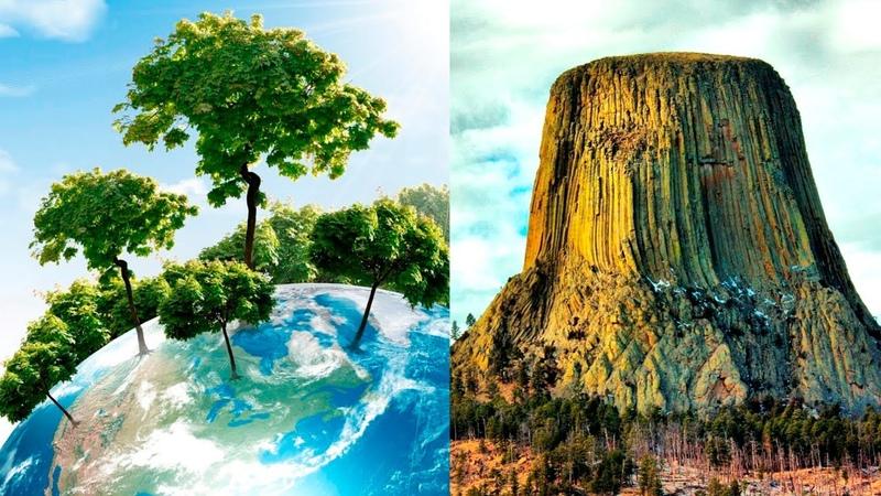 На Земле лесов нет | Кремниевые деревья | Есть ли на планете деревья старше 200 лет