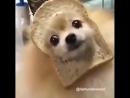 хлебные собачки