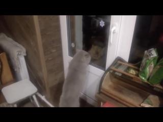 Открой мне дверь... говорящий кот😂