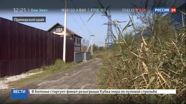 Новости на Россия 24 Тревога во Владивостоке тигр пришел в каменные джунгли