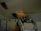 army bastinado