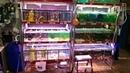 Аквариумные стойки для продажи рыбы в зоомагазине