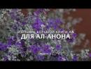 Изучение Большой Книги АА для Ал-Анона