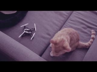 Кошки и дроны