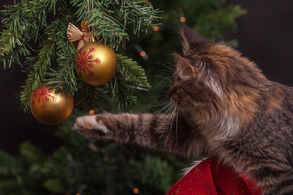 На Милашенкова открылся пункт приема новогодних ёлок