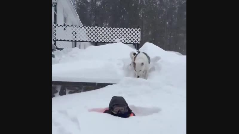 Собаки и снег