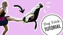 Ako naučiť psa ODRAZ OD NOHY | výcvik psa
