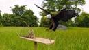 Удивительная быстрая ловушка для птиц использующая ловушку платформы Snare Snare простая лучшая л