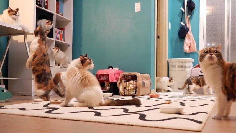치순53097; 고양이 손님들은 첫날 밤 무얼할까?