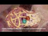 Как развиваются стволовые клетки молочной железы при беременности