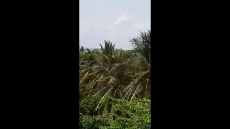 остров обезьян Хайнань