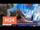 Дворовый кот проехал под днищем автомобиля 130 километров - Москва 24