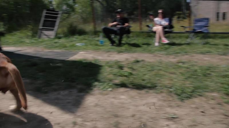Ариэль mp4