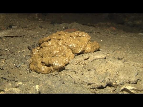 Сюжет ТСН24 Жильцы тульского дома годами пытаются выяснить причины сырости в подвале