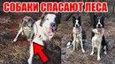 Собаки помогают восстанавливать сгоревшие леса Собаки спасают сгоревший лес Собаки сеют семена