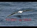 Perdu en Mer. (Vendée Globe 1996-'97 documentaire.)