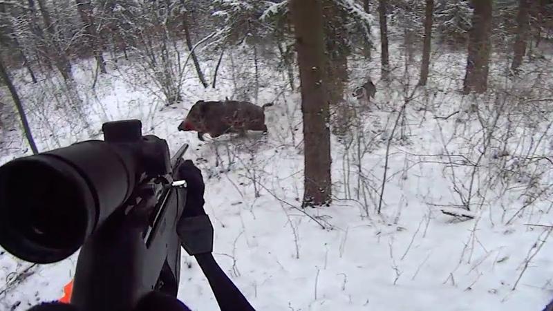 Охота на кабана зимой 2018 Точные выстрелы Wild boar hunting in snow 2018
