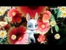 Полина С Днем Рождения (720p).mp4