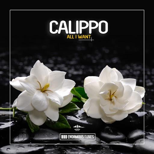 Calippo альбом All I Want