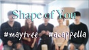 Shape of you acappella Ed Sheeran cover by Maytree 쉐입오브유 아카펠라 메이트리 커버
