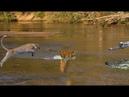 Wild Animals Fighting | Leopard vs Crocodile, Baboon, Lion, Hyena - World of Wildlife