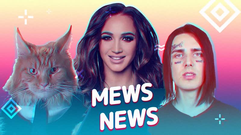 Mews News. Кот-футболист, Face и Бузова