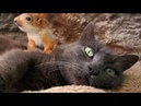 Unconventional family cat raises four baby squirrels alongside new kittens